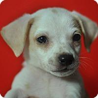 Adopt A Pet :: Thumper - Riverside, CA