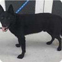 Adopt A Pet :: Sammy - Leesville, SC