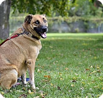 Shepherd (Unknown Type) Mix Dog for adoption in Midland, Michigan - Cain