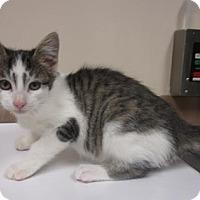 Adopt A Pet :: YVONNE - Reno, NV