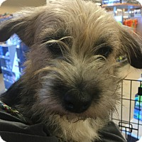Adopt A Pet :: Keely - Powder Springs, GA