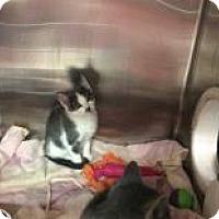 Adopt A Pet :: Donatello - Janesville, WI