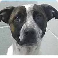 Adopt A Pet :: Wallace - Springdale, AR