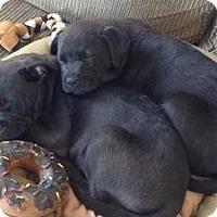 Adopt A Pet :: Duncan - Marlton, NJ