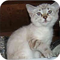 Adopt A Pet :: Winter - Dallas, TX