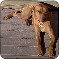 Adopt A Pet :: Elly - in Maine-Foster Needed - kennebunkport, ME
