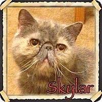 Adopt A Pet :: Skylar - Beverly Hills, CA