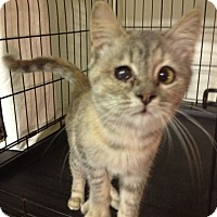 Adopt A Pet :: Laura - Byron Center, MI