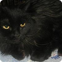 Adopt A Pet :: Pia - brewerton, NY