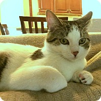 Adopt A Pet :: Rodger - Berkeley Hts, NJ