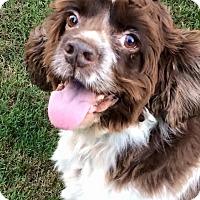 Adopt A Pet :: Skipper - Alpharetta, GA