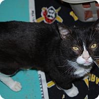 Adopt A Pet :: Justin - Pottsville, PA
