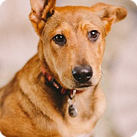 Adopt A Pet :: Shye - Portland, OR