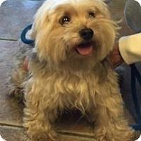 Adopt A Pet :: Frankie - Canoga Park, CA