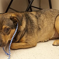 Rottweiler/German Shepherd Dog Mix Dog for adoption in Baton Rouge, Louisiana - Blossom