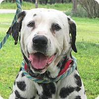 Adopt A Pet :: Tanner - Turlock, CA