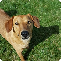 Adopt A Pet :: Trixie - Bend, OR