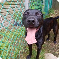 Adopt A Pet :: Linus - Manhasset, NY
