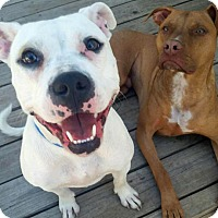 Adopt A Pet :: Lonnie - Troy, MI
