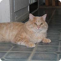 Adopt A Pet :: Jack - Elliot Lake, ON