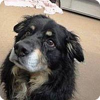 Adopt A Pet :: Cyrano - Las Vegas, NV
