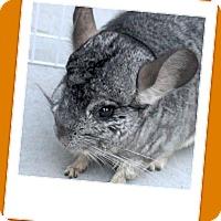 Adopt A Pet :: Pickles - Titusville, FL