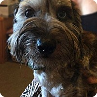 Adopt A Pet :: Charlie - Matawan, NJ