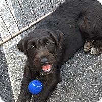 Adopt A Pet :: Gidget - Jasper, TN