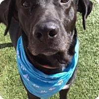 Labrador Retriever Mix Dog for adoption in Greensboro, North Carolina - Ryder