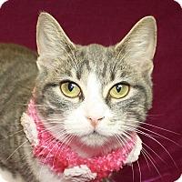 Adopt A Pet :: Kinsey - Jackson, MI