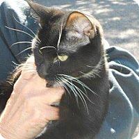 Adopt A Pet :: KitKat - Ogallala, NE