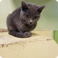 Adopt A Pet :: Justin - Indianapolis, IN