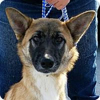 Adopt A Pet :: Spark - Monrovia, CA