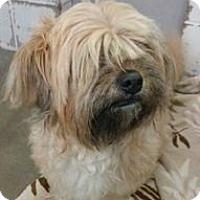 Adopt A Pet :: Sadie - Springdale, AR
