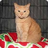 Adopt A Pet :: Rusty and Sunny - Milford, MA