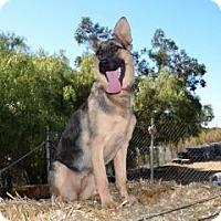 Adopt A Pet :: Rudi - San Diego, CA