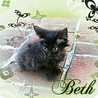 Adopt A Pet :: Beth - Washington, DC