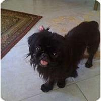 Adopt A Pet :: Suzie - Orlando, FL