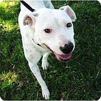 Adopt A Pet :: Pinky - Meridian, MS