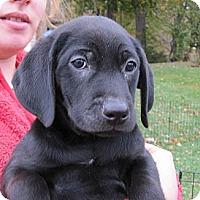 Adopt A Pet :: Mark - South Jersey, NJ