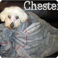 Adopt A Pet :: chester - Allentown, PA