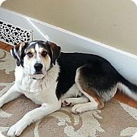 Adopt A Pet :: Miles - Saskatoon, SK