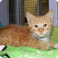 Adopt A Pet :: Swizz - Dover, OH