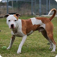 Adopt A Pet :: Mister - Plant City, FL