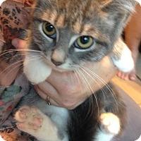 Adopt A Pet :: Yahtzee - East Brunswick, NJ