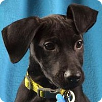 Adopt A Pet :: Elijah - Minneapolis, MN