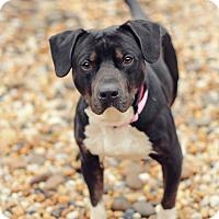 Adopt A Pet :: Hoss - Marietta, GA