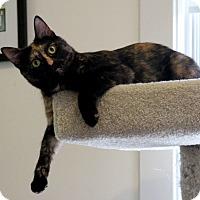 Adopt A Pet :: Ariana - Gaithersburg, MD