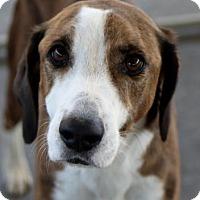 Adopt A Pet :: Cooper - Picayune, MS