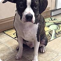 Adopt A Pet :: Lucky - Thousand Oaks, CA